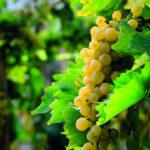 I vini bianchi da aperitivo - Ultime tendenze e novità per brindare al tramonto